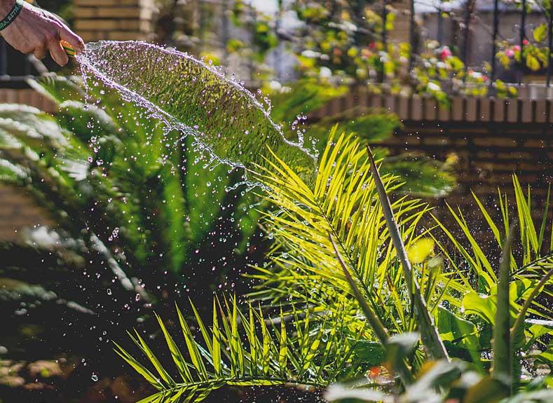 Blog de esparza: Pon una planta en tu vida
