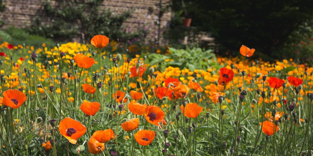 arquitectos vitoria bibao jardín